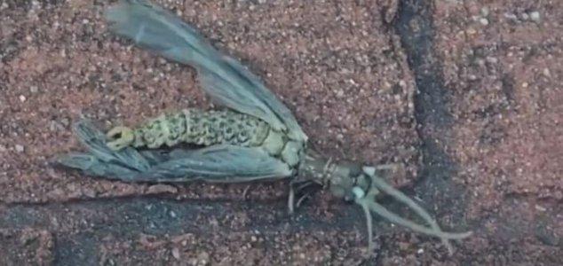 奇妙な昆虫の撮影に成功